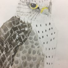 Eagle Illustration by Sawa, Insight School of Art